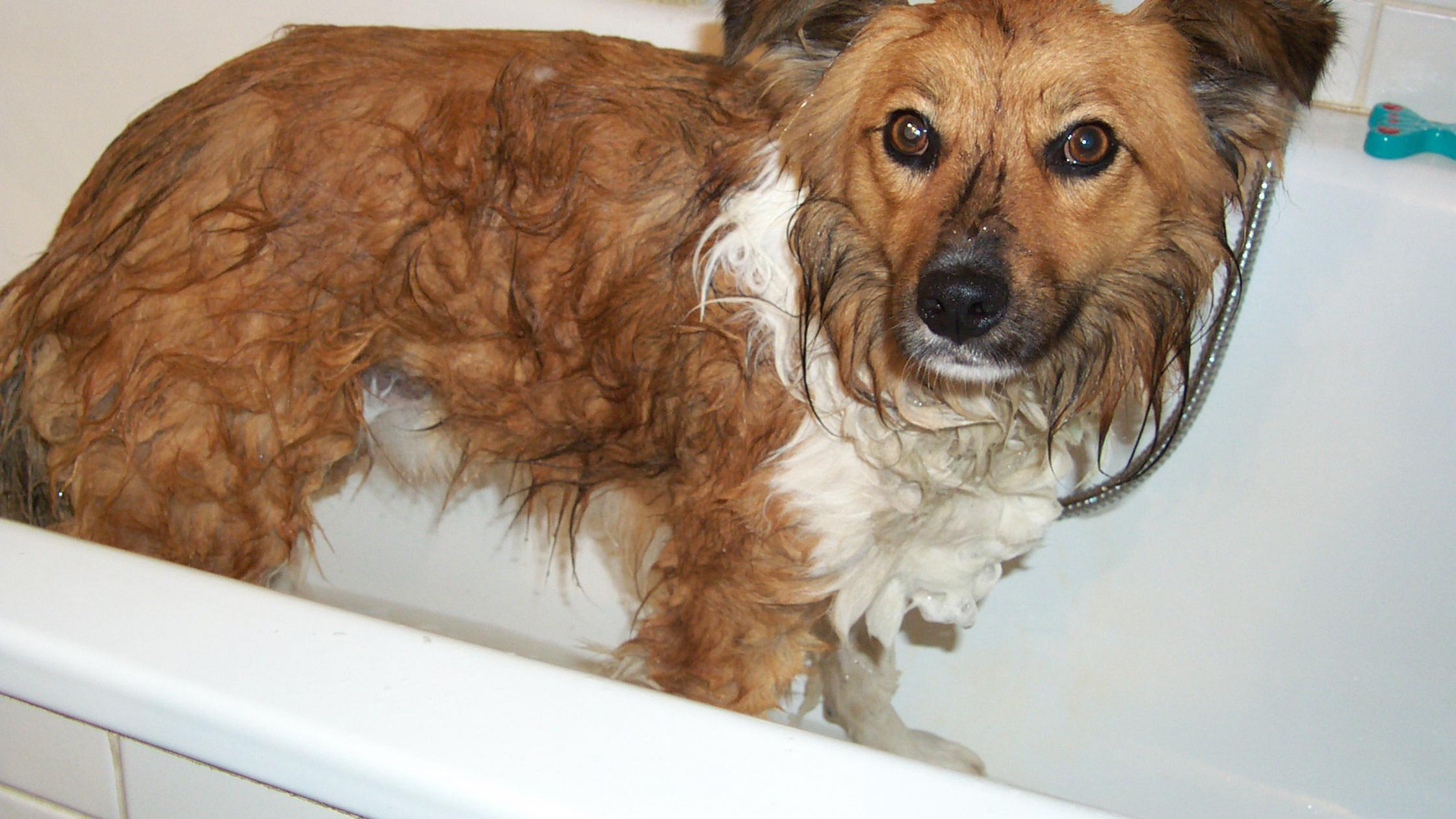 Einen Hund müssen Sie nicht waschen und sollen es möglichst nicht.