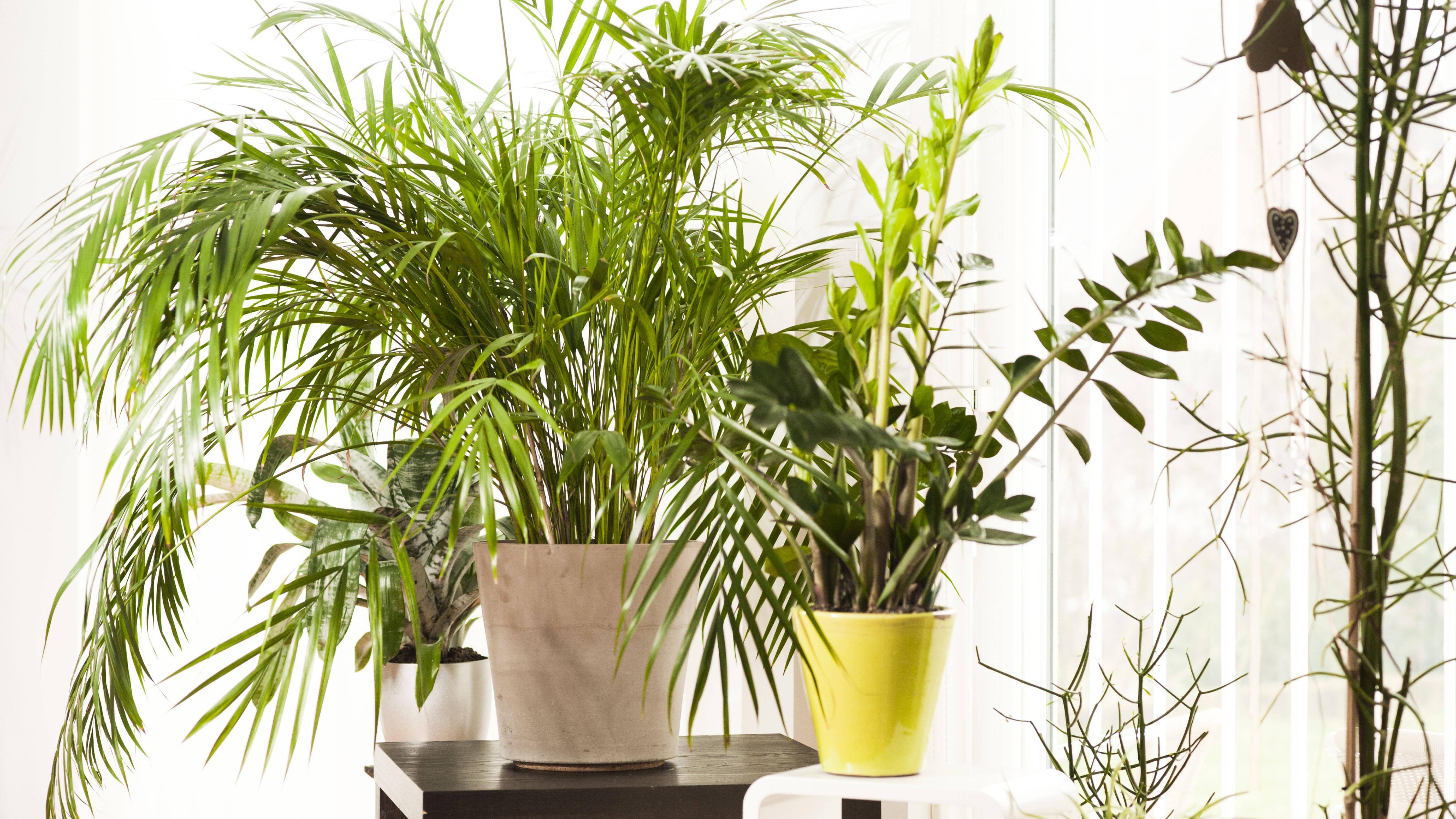 Behaarte Pflanzenblätter sollten Sie nach Möglichkeit trocken reinigen, damit keine Fäulnis entsteht.