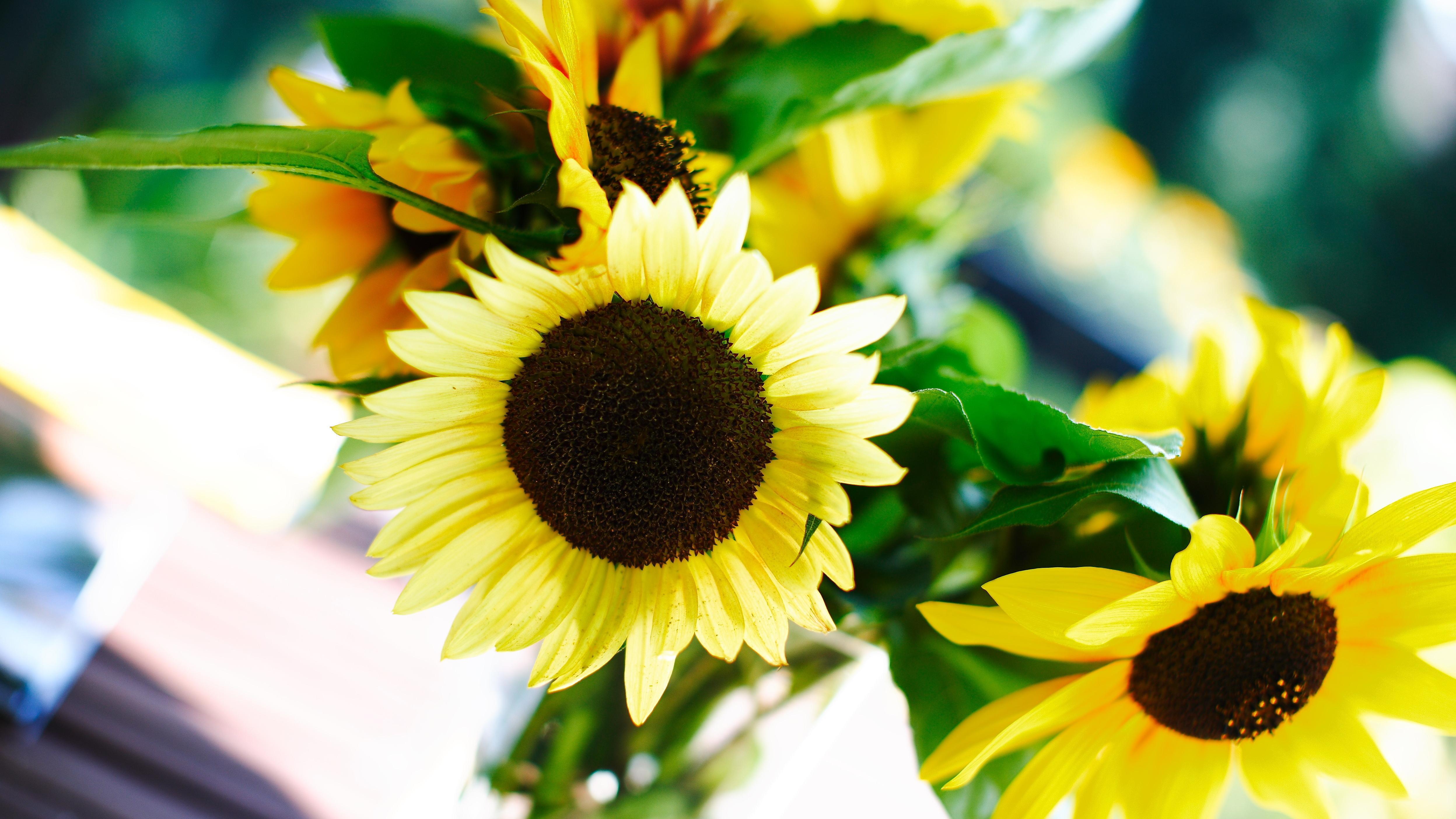 Blumen aus dem heimischen Garten, wie beispielsweise die Sonnenblume, können bei einer Hochzeit als Dekoration verwendet werden.