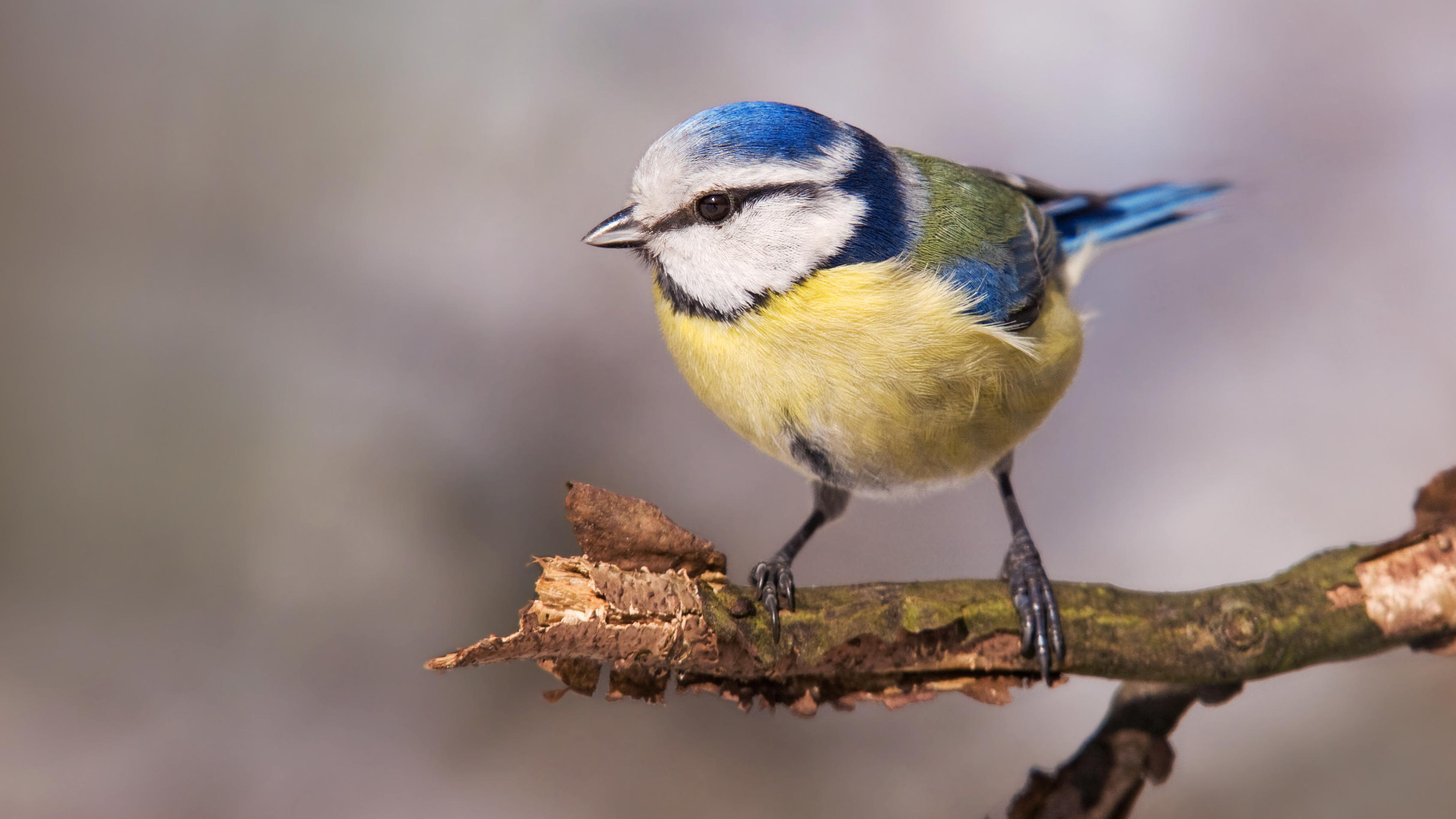 Vögel bestimmen: So geht's per App