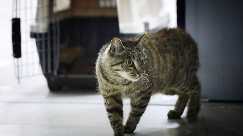 Unangenehmen Uringeruch mit Hausmitteln oder chemischen Produkten entfernen, etwa von Katzen
