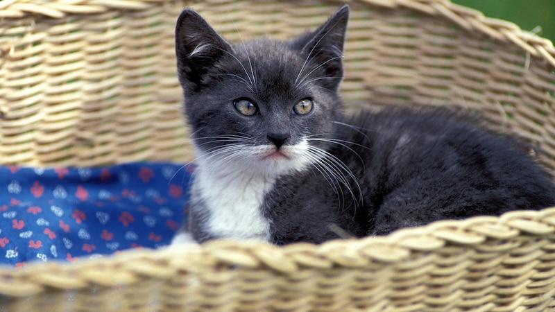 Haustier kaufen und verkaufen - 5 Onlineportale im Überblick