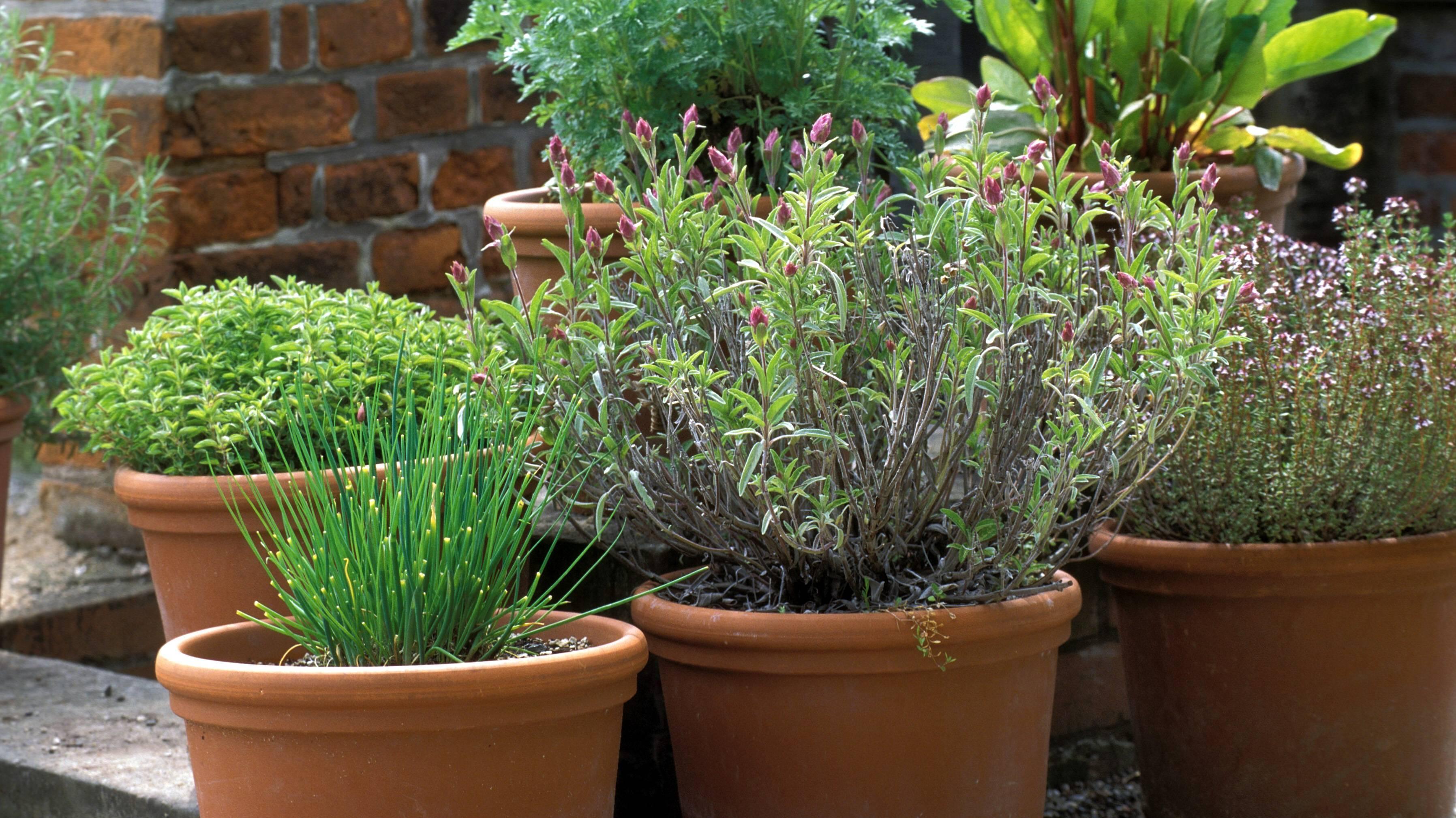 Kräuter gegen Arthrose: Mit diesen Pflanzen die Beschwerden lindern