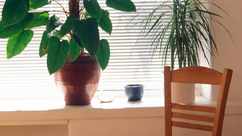 Deko für die Fensterbank: 5 kreative Ideen