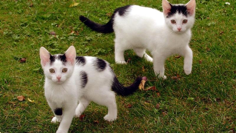 Schöne Katzennamen weiblich: Das sind die Top 10