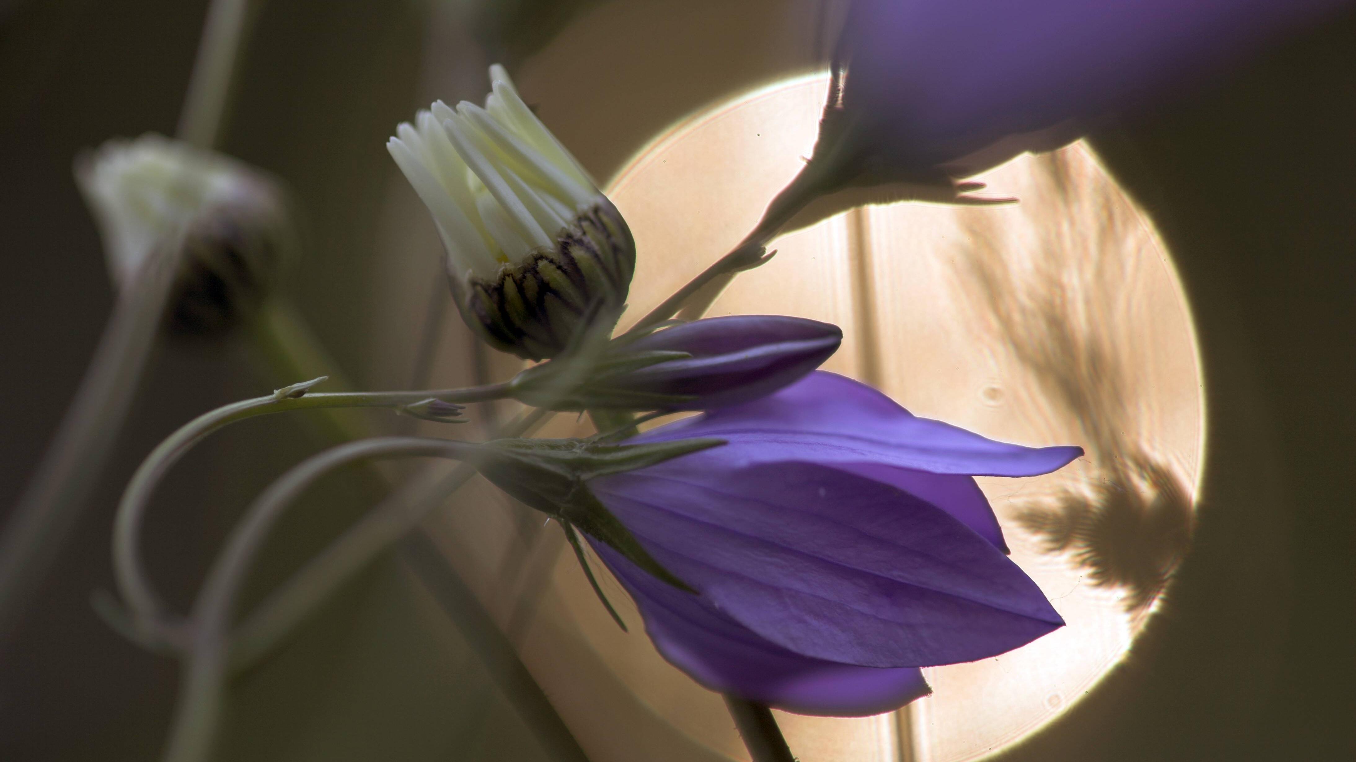 Ob es für Sie sinnvoll ist, Ihre Pflanzen und Blumen nach dem Mondkalender zu gießen, müssen Sie selbst herausfinden.
