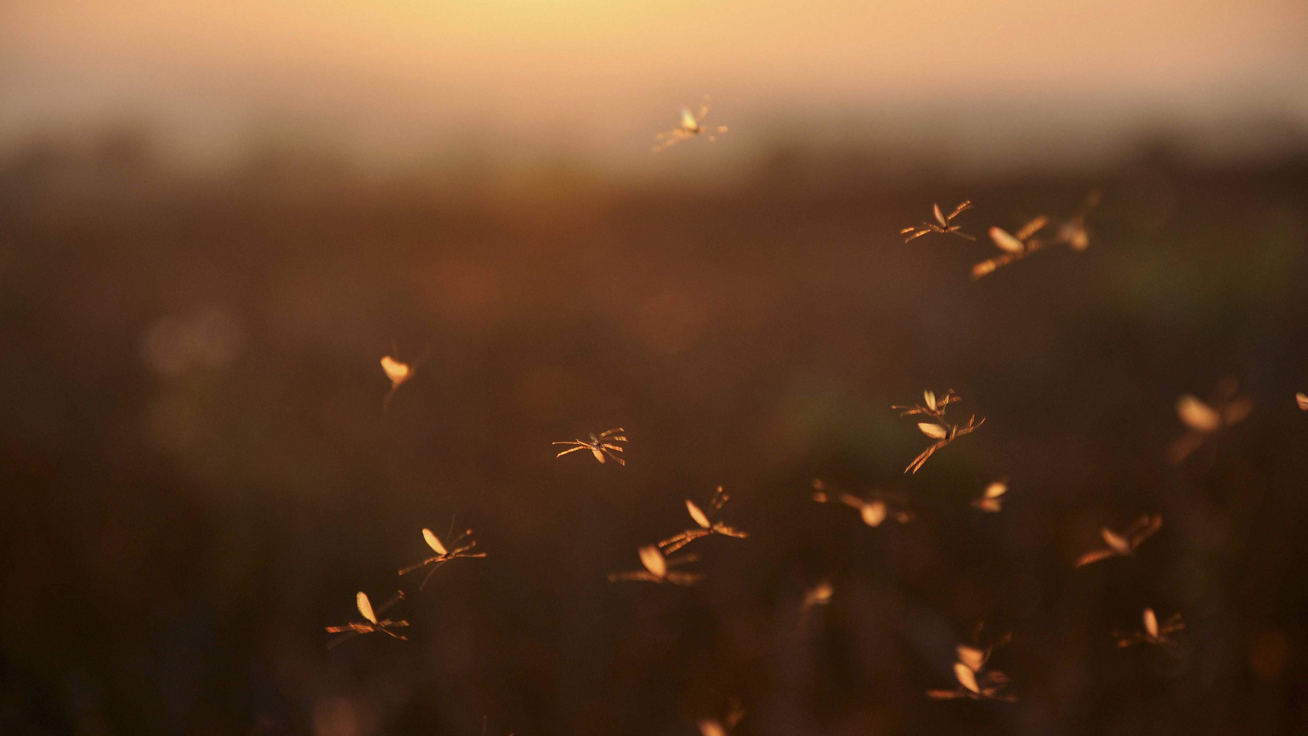 Warum es Mücken gibt - Wir klären auf