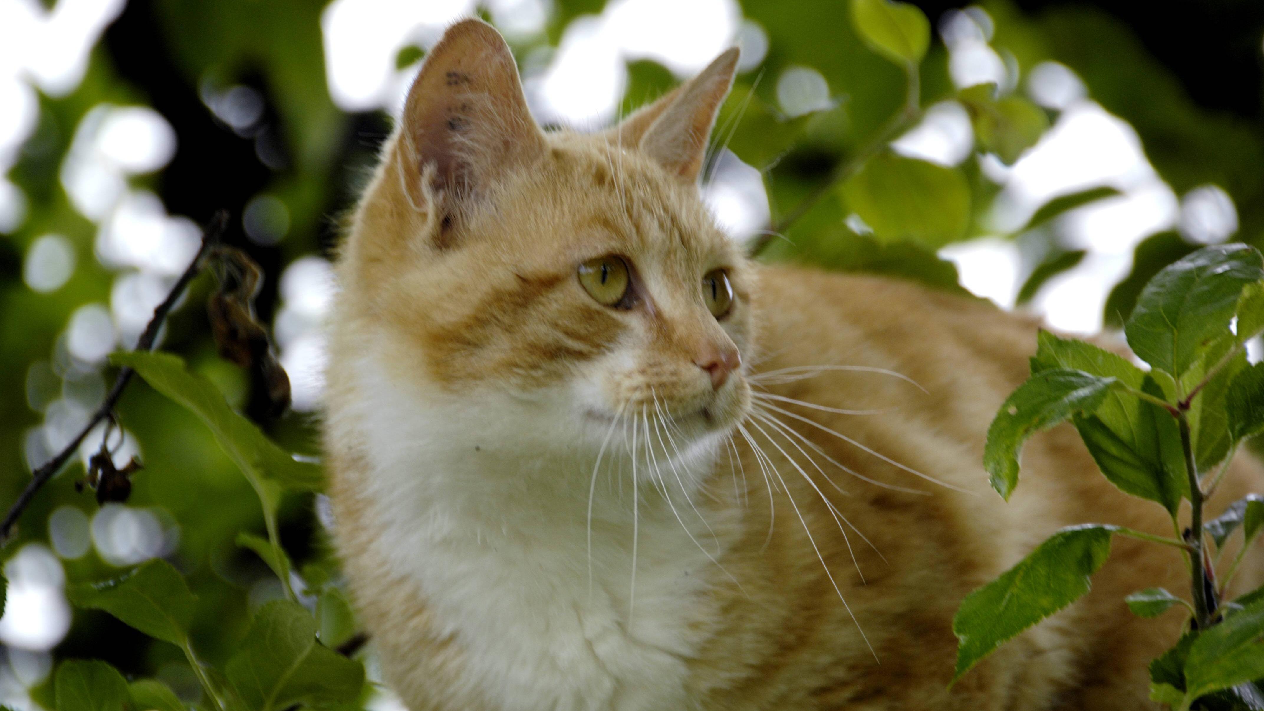 Eine Katzenklappe sorgt für selbstbestimmten Freilauf.