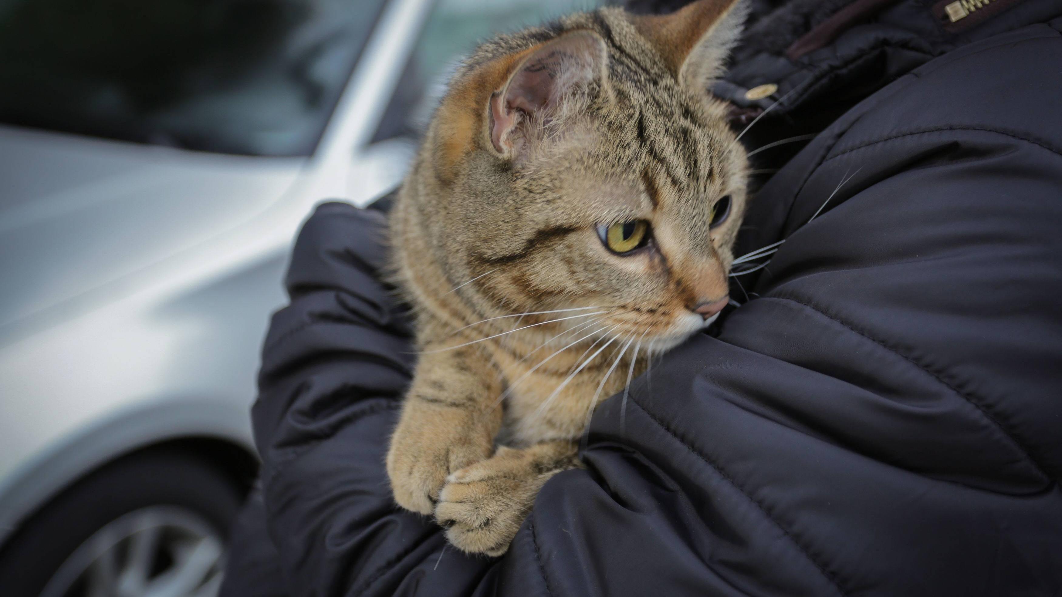 Katze vegan ernähren: Ist das gesund? Das müssen Sie wissen