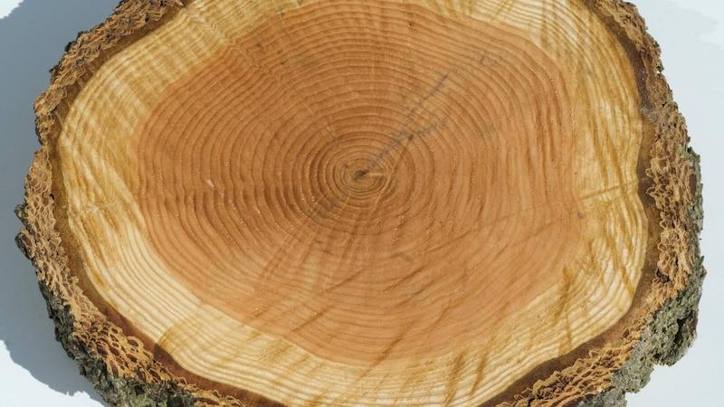 Basteln mit Holz aus dem Wald - 3 tolle Ideen