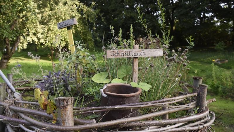 Kräuter für Tee: 10 geeignete Kräuter aus dem eigenen Garten