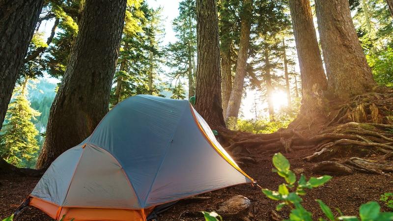Zelten im Wald - so wird es möglich