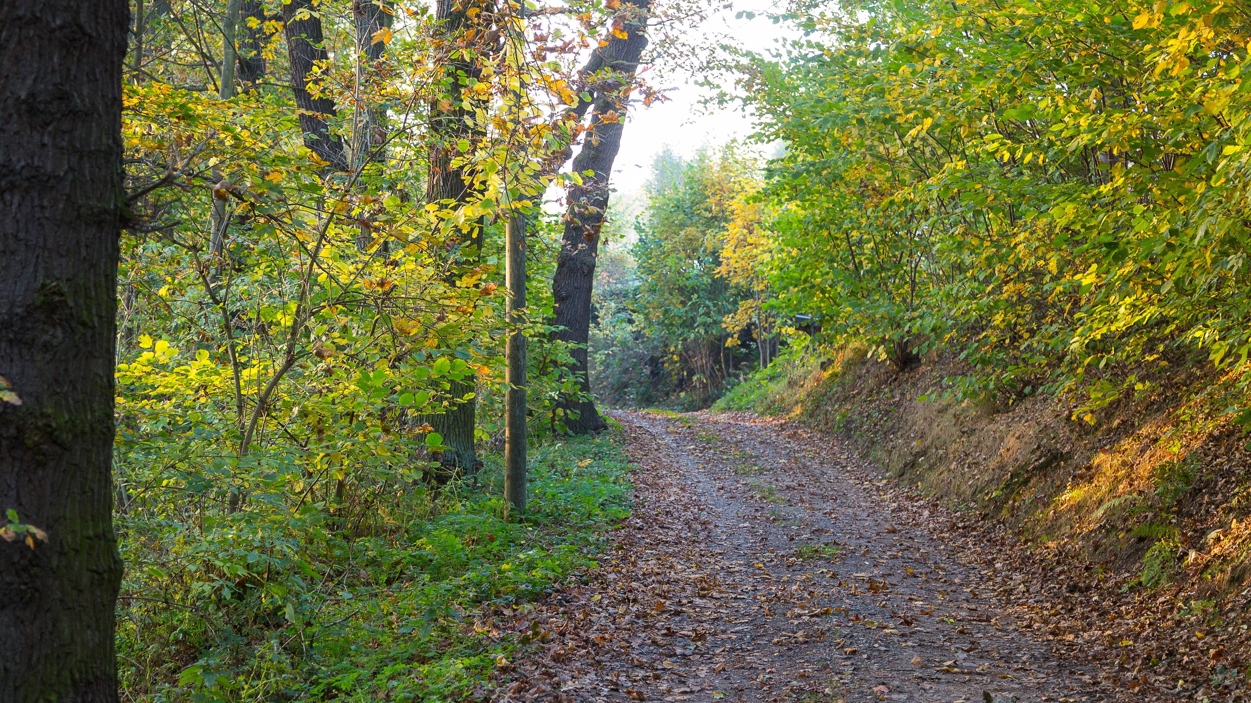 Für ein Lager im Wald ist nicht nur das Bauen, sondern auch das Auswählen des richtigen Ortes von Bedeutung.