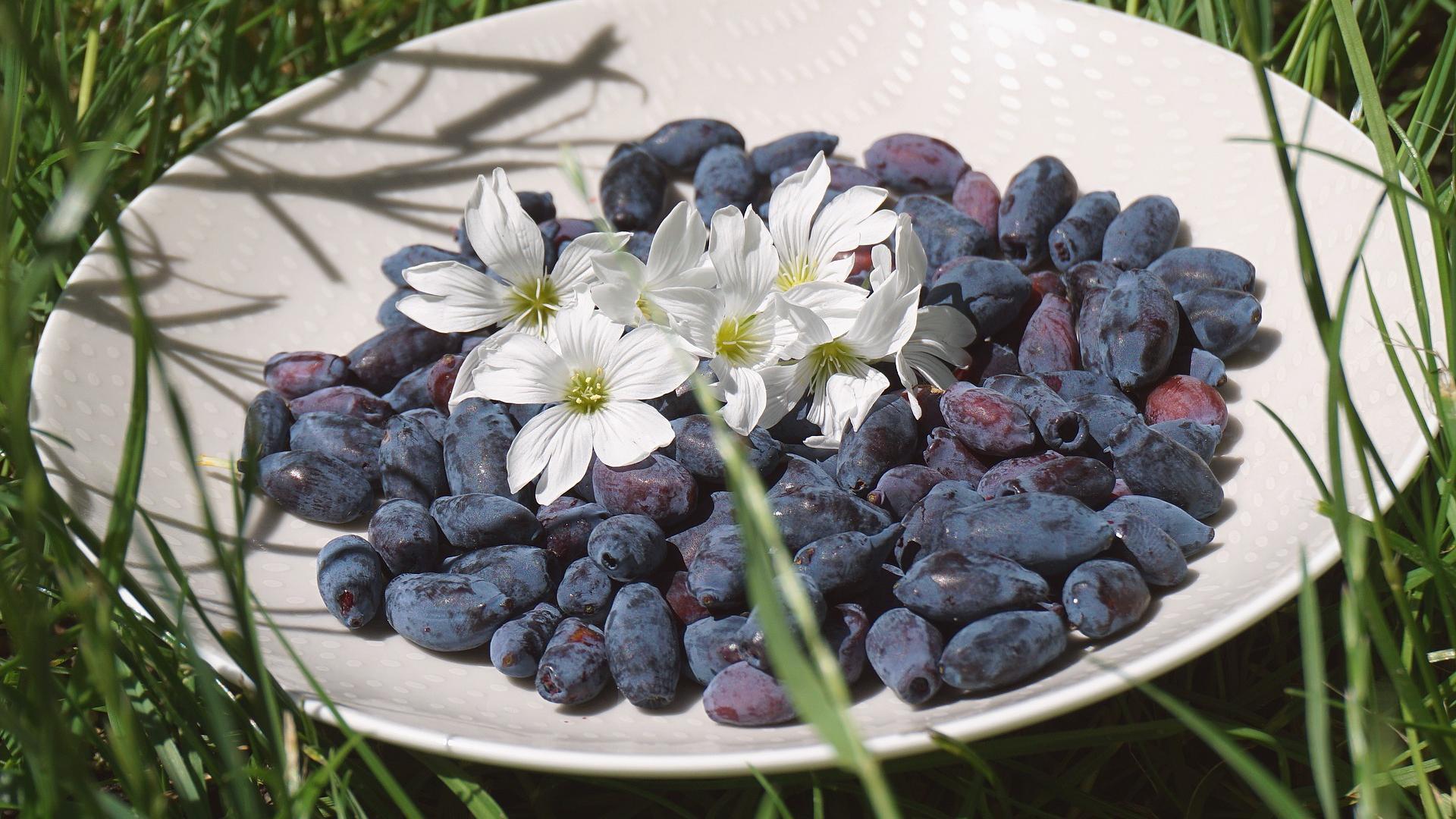Haskap-Beere: So gesund ist das Superfood