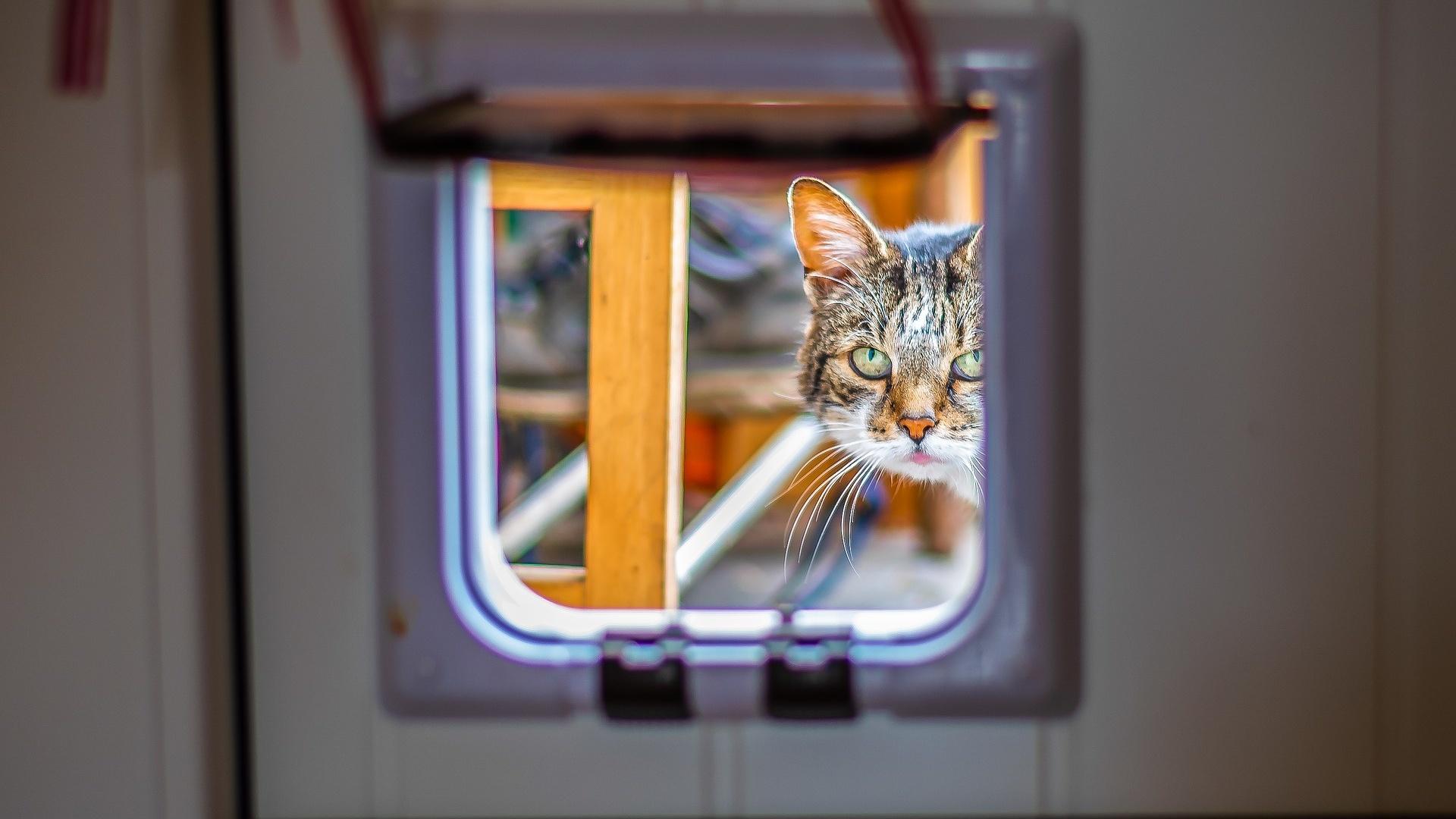 Katzenklappe selber bauen - so einfach klappt's