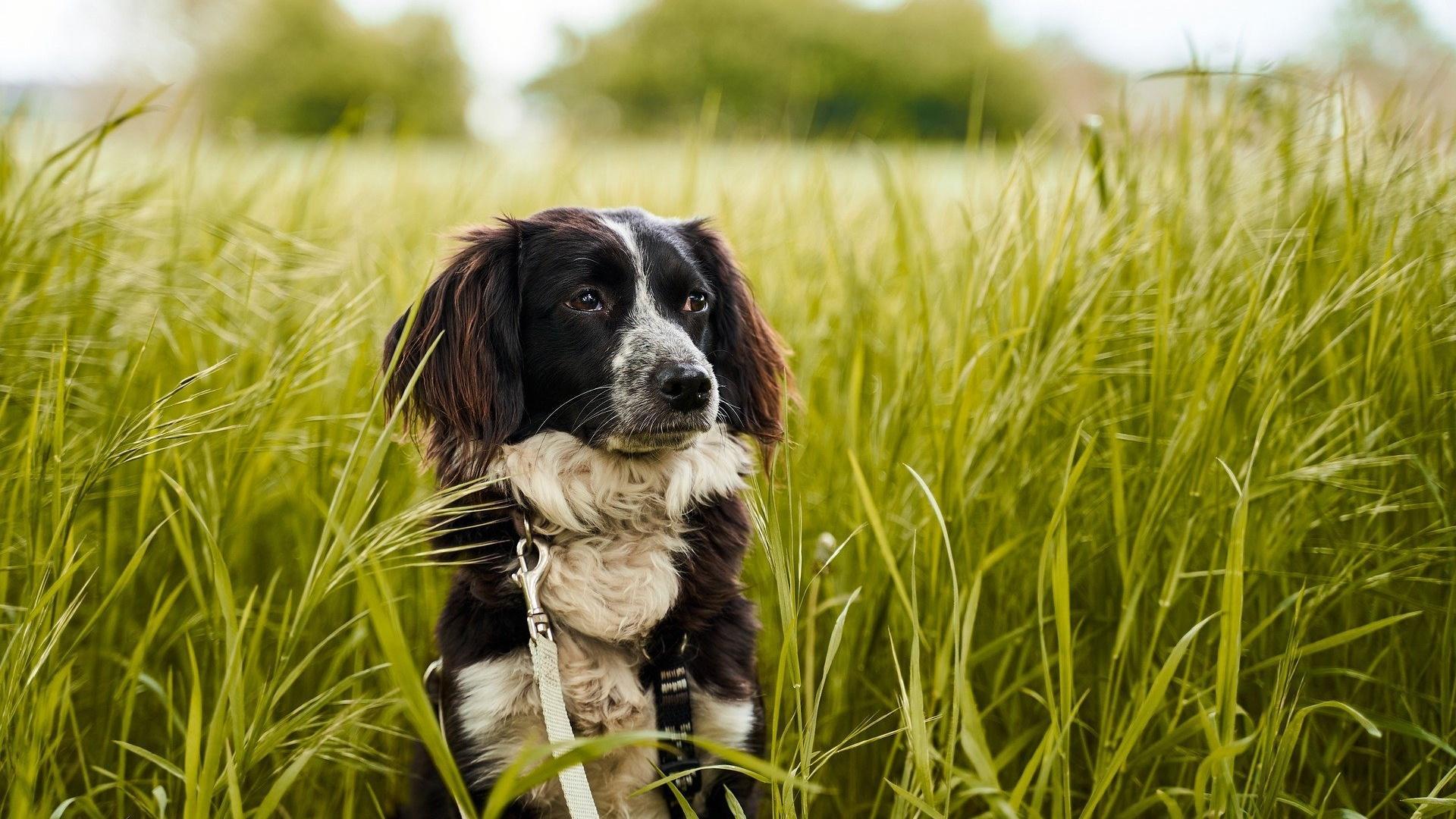 Pollenallergie bei Hunden äußert sich meist mit einem starken Juckreiz der Haut.