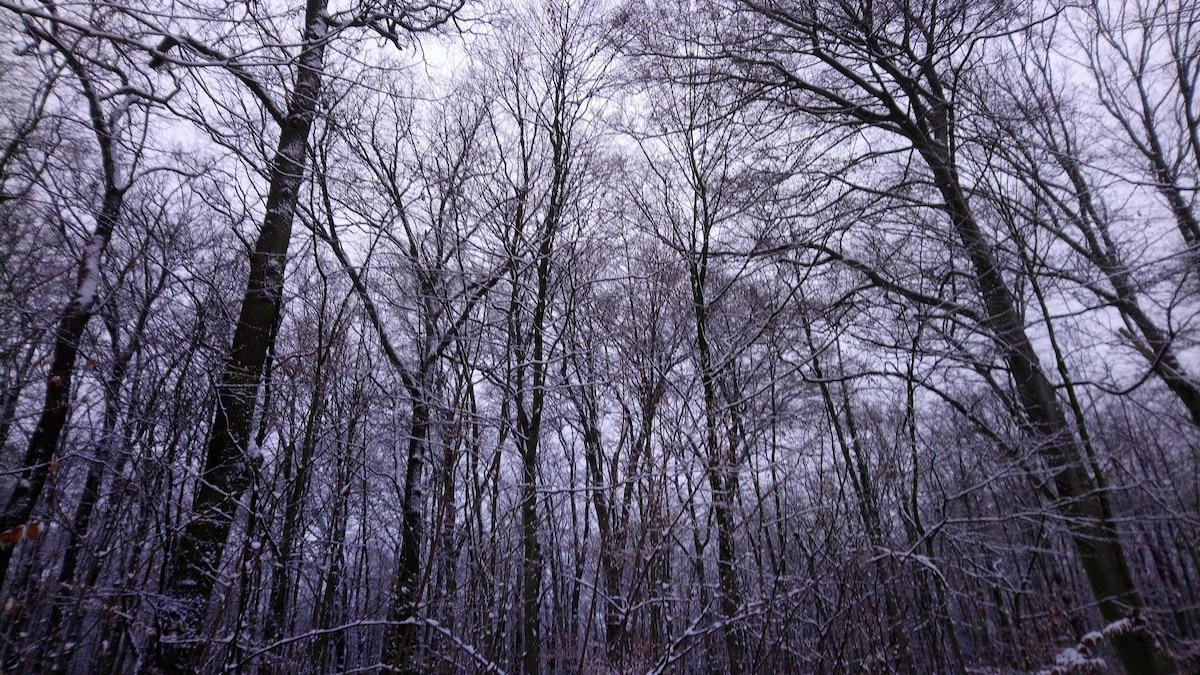 Jede Jahreszeit hat im Wald ihren Reiz