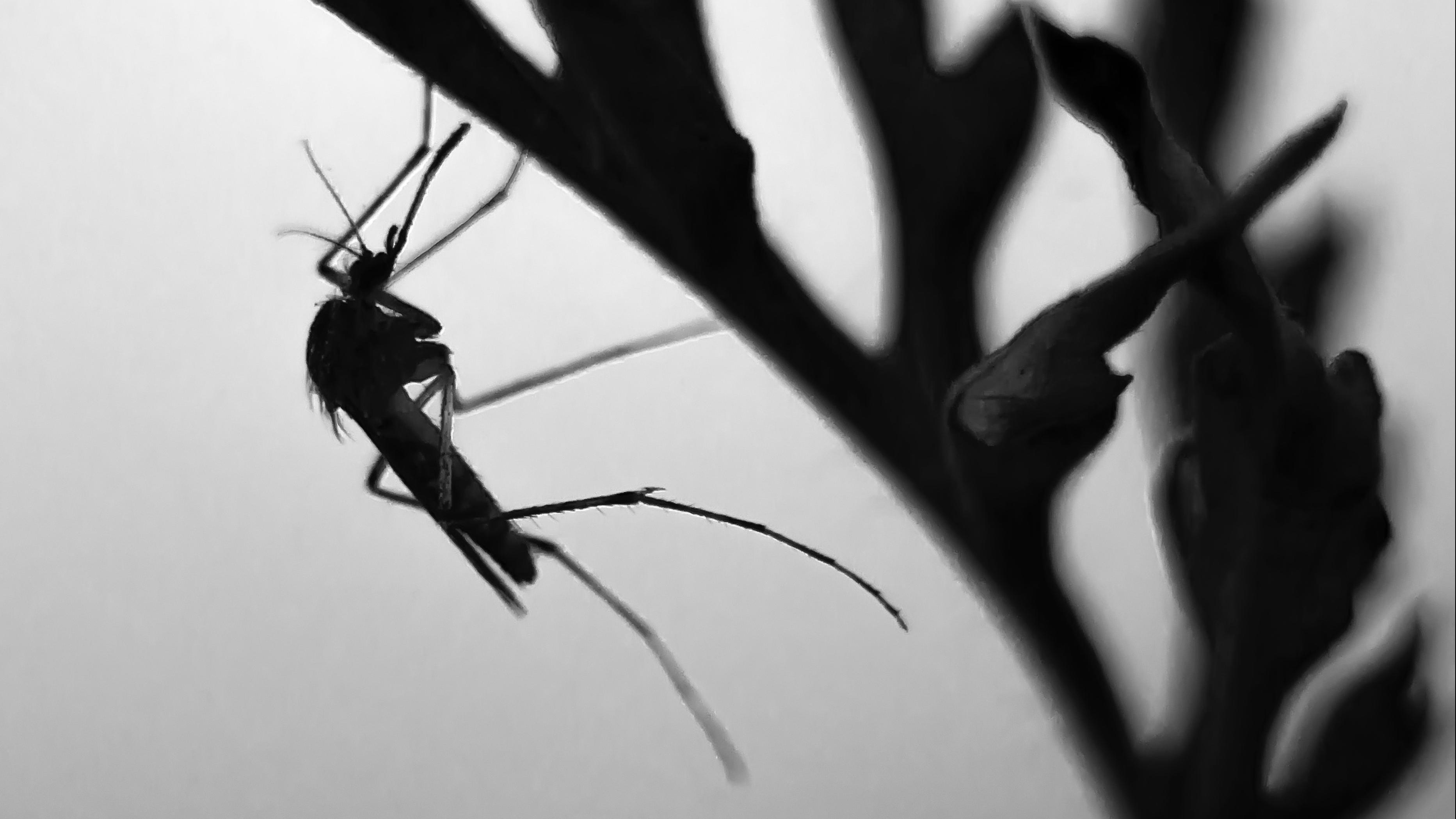 Mückenstich am Auge: Das hilft sofort