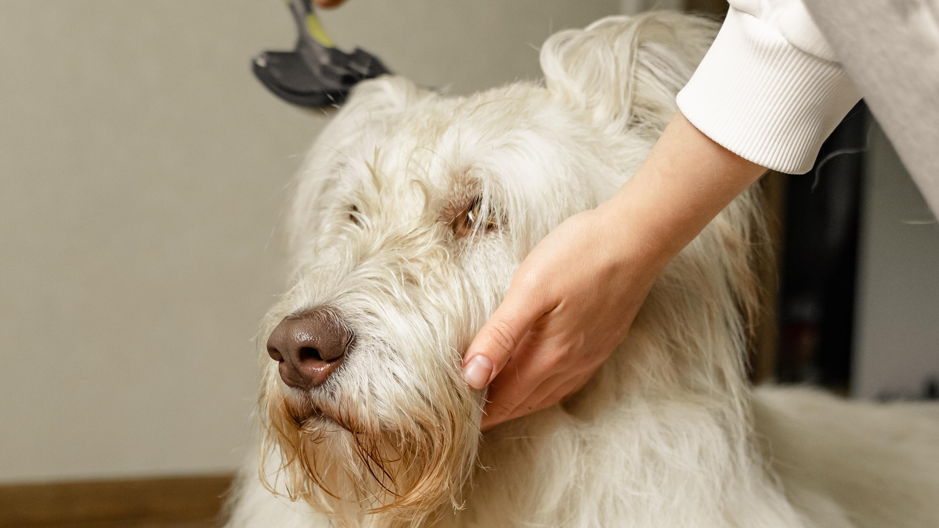 Regelmäßiges Bürsten trägt zu der Erhaltung einer gesunden Haut bei und beugt Hautkrankheiten beim Hund vor.