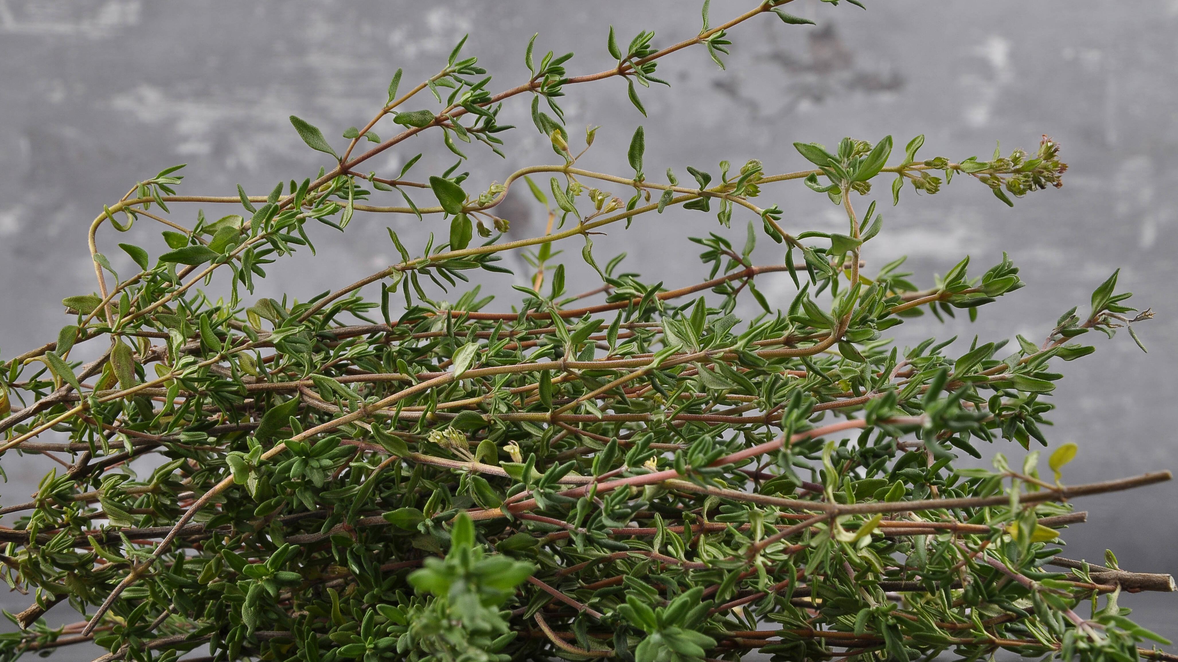 Verholzende Kräuter schneiden Sie einmal jährlich nach der Blüte.