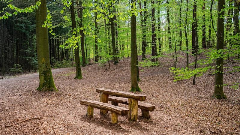 Lager bauen im Wald - so geht's