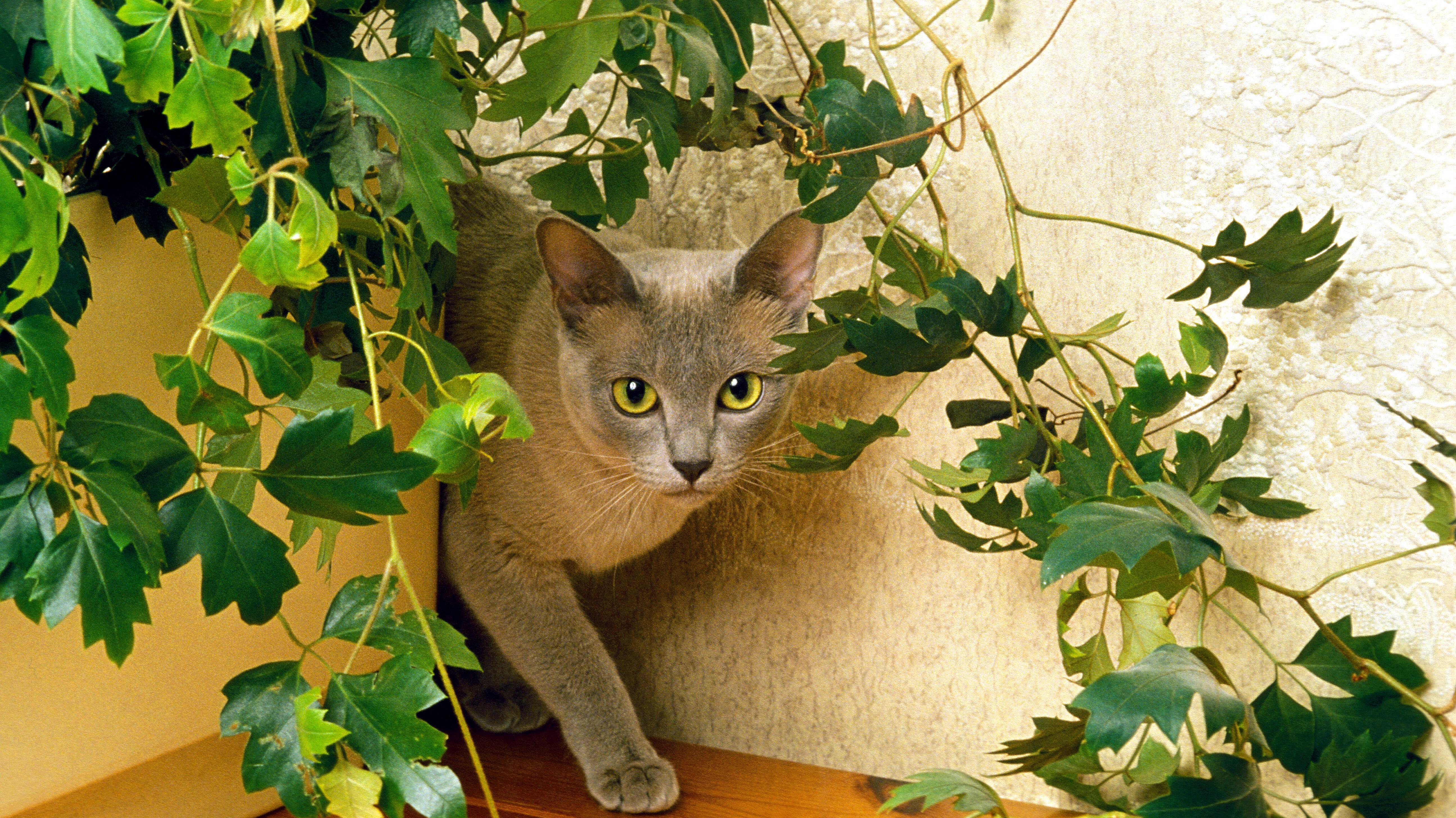 Katzenfreundliche Zimmerpflanzen: Diese Auswahl eignet sich für Vierbeiner