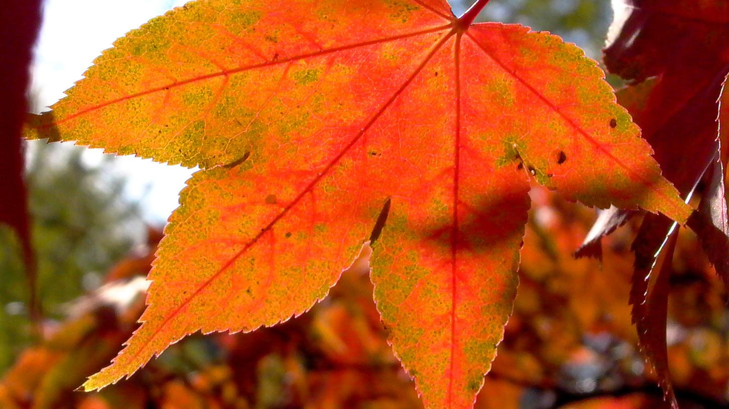 Blätter laminieren: Anleitung und Ideen