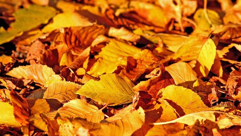 Herbst: Redewendungen und Sprichwörter zur Jahreszeit
