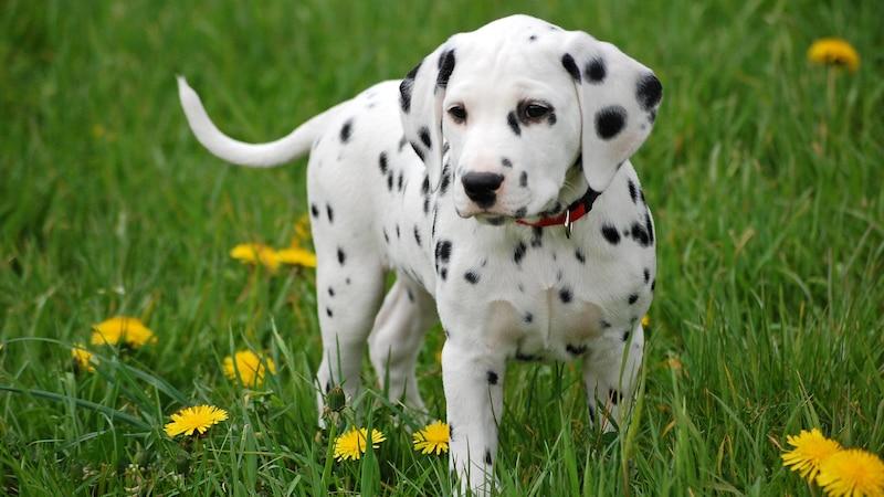 Hund leckt ständig: Das können mögliche Gründe sein