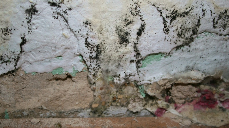 Rosa Schimmel, der sich an Wandflächen, Tapeten oder zwischen Fugen gebildet hat, sollten Sie immer möglichst schnell entfernen, um eine Ausbreitung zu vermeiden.
