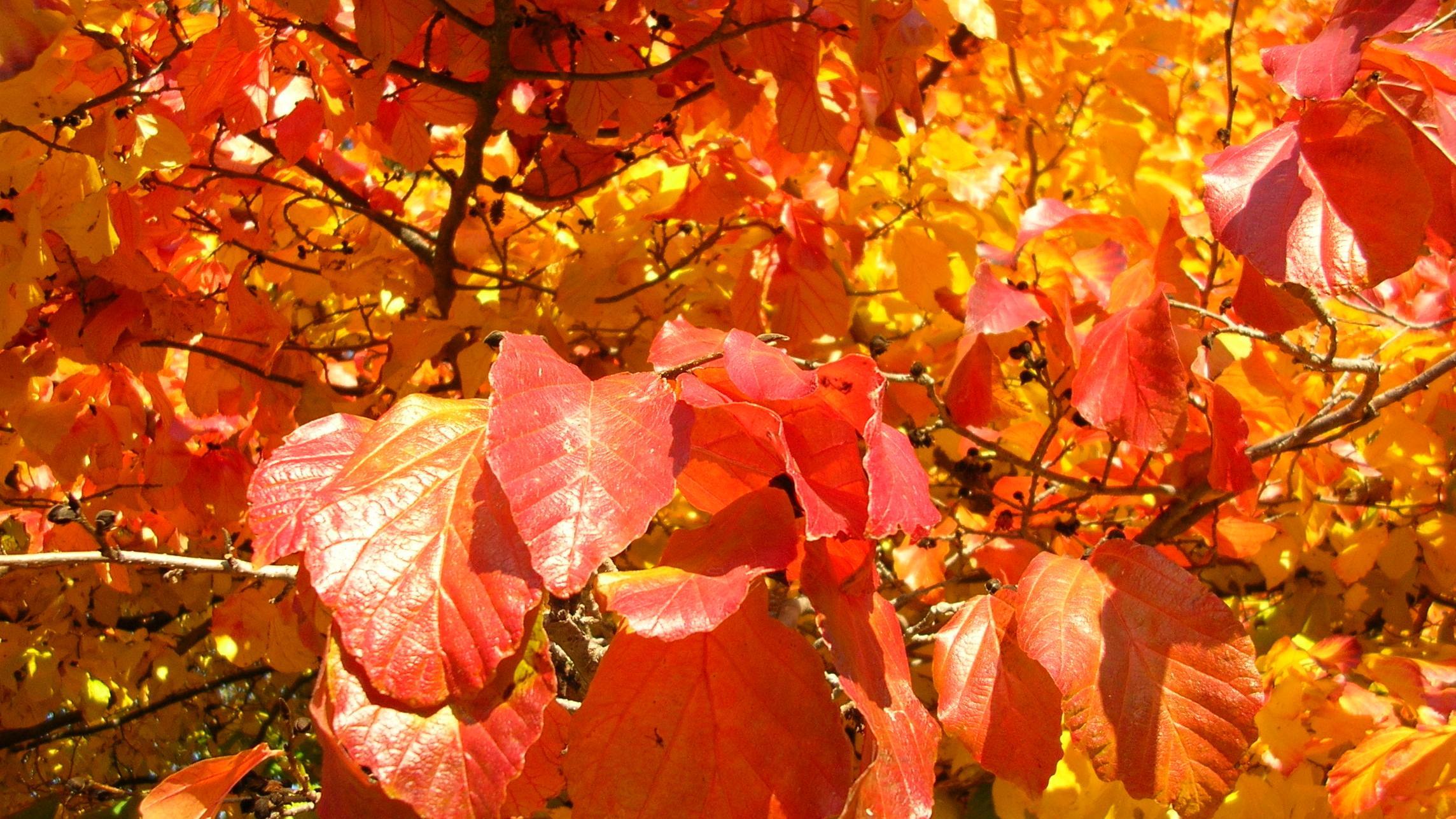 Gegen Herbstblues können Sie auch ankämpfen – schließlich ist der Herbst eine äußerst schöne Jahreszeit.