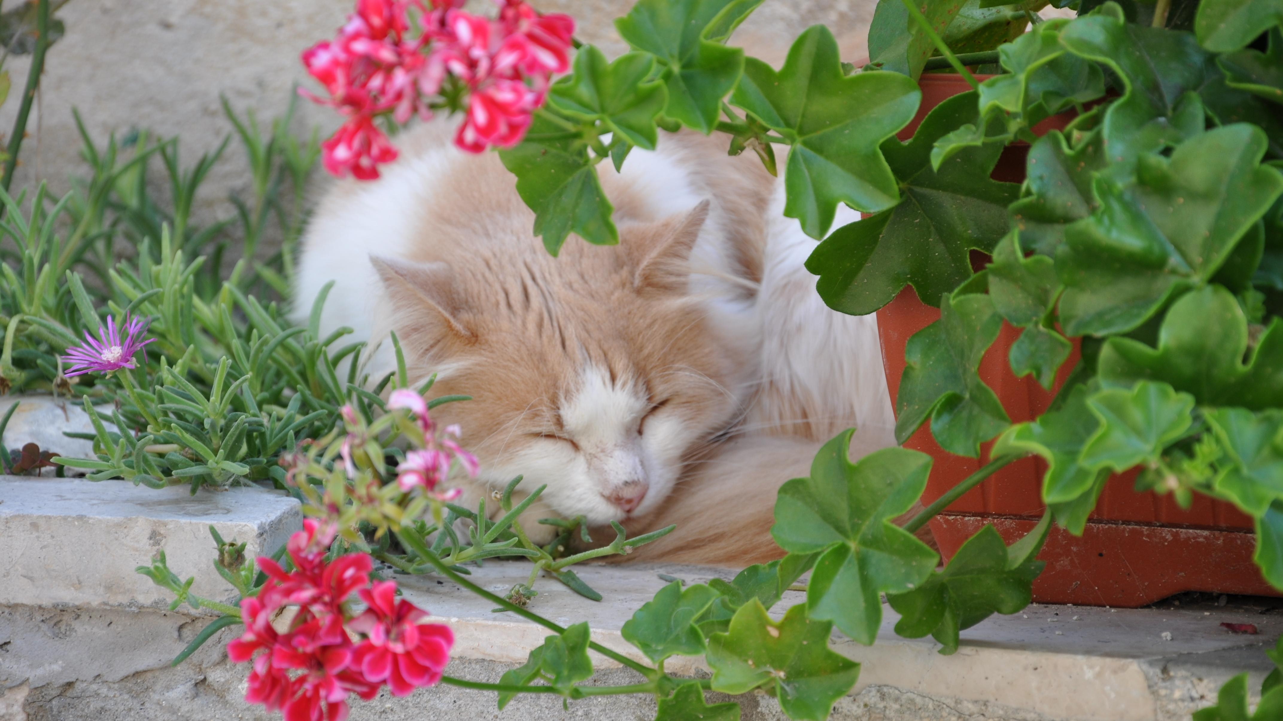 Wir stellen Ihnen 10 katzenfreundliche Zimmerpflanzen vor