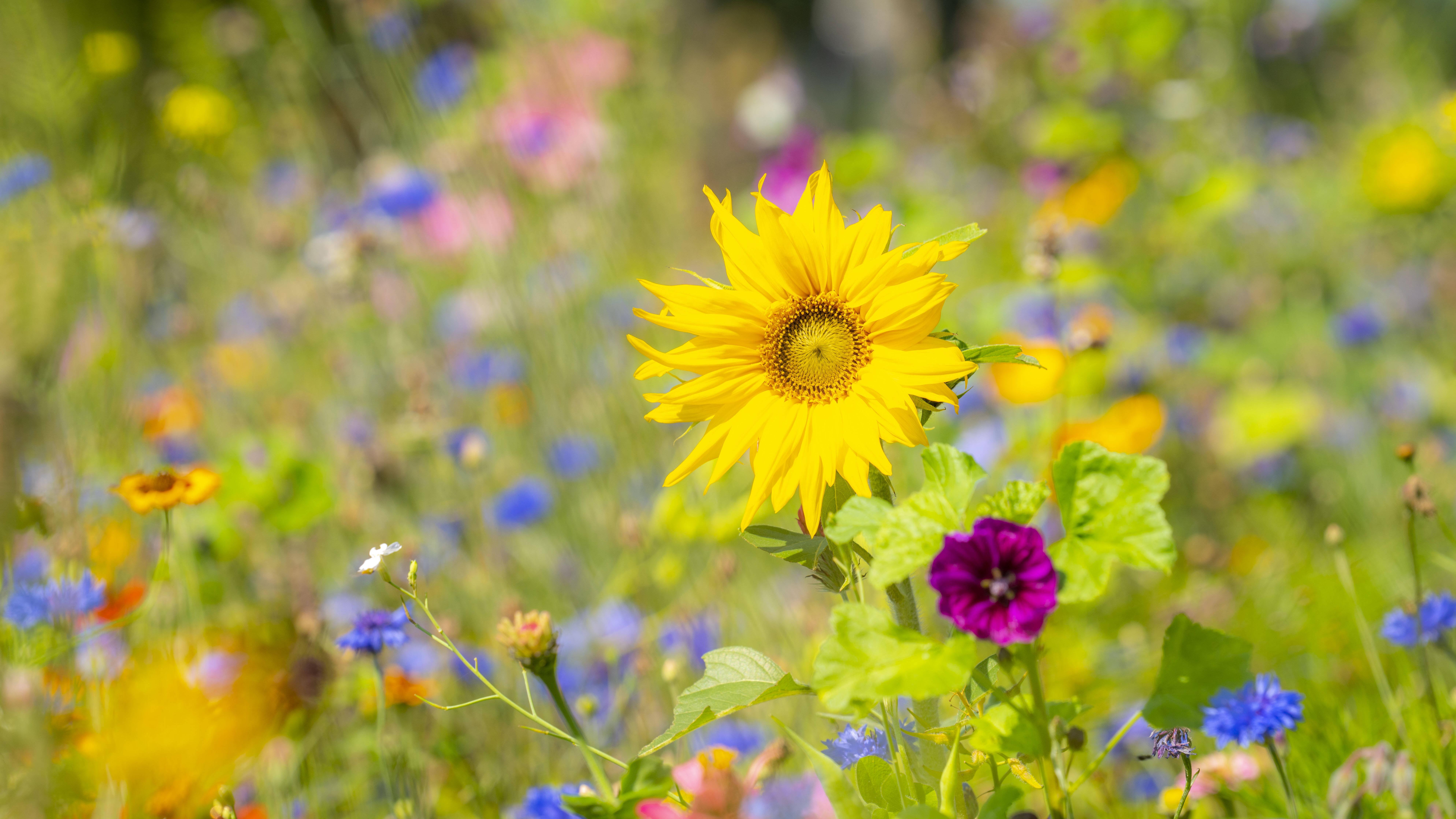 Blackbox Gardening: Das hat es mit dem Trend auf sich