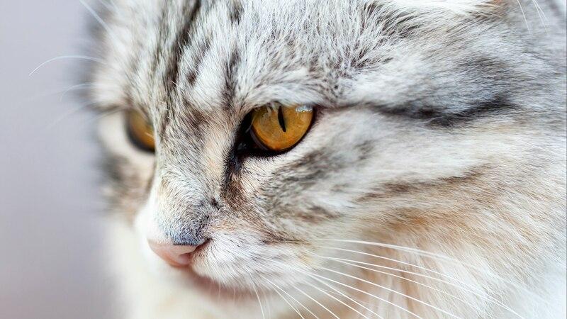 Katzenhaare von der Kleidung entfernen: So klappt's
