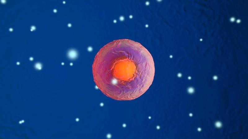 Zellkern: Funktion & Aufbau des Nucleolus