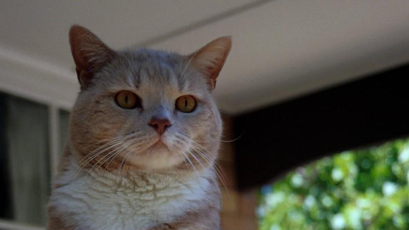Katze häkeln: So wird's gemacht