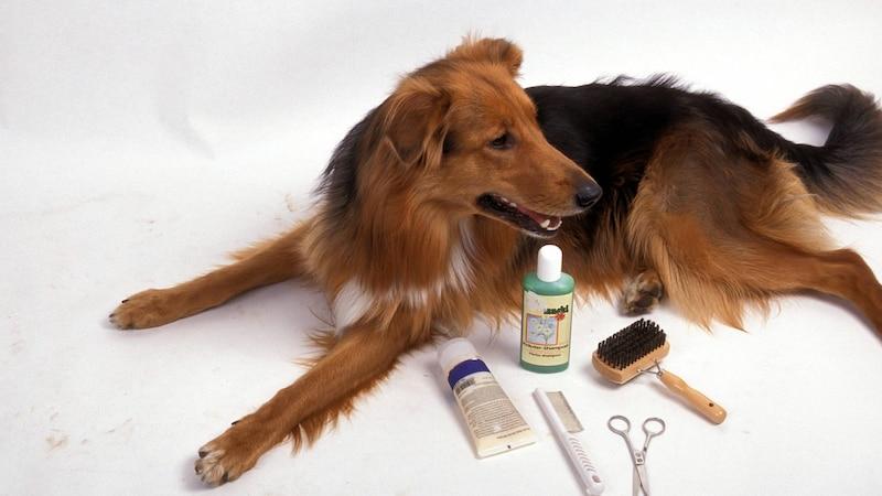 Verfilztes Fell beim Hund: Das können Sie tun