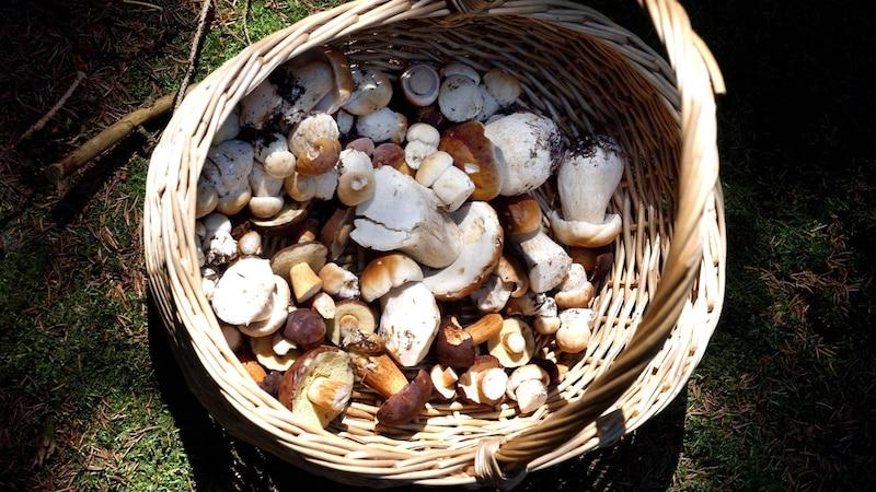 Pilze können Blähungen hervorrufen, im schlimmsten Fall führen die falschen Sorten sogar zu Vergiftungen.