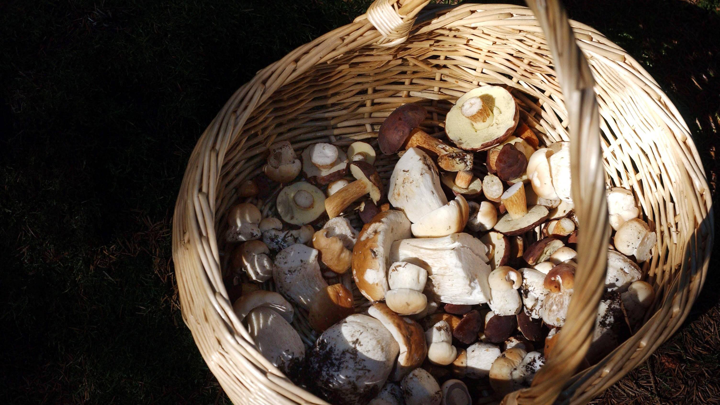 Haltbarkeit von Pilzen: So lange halten Champignon und Co.