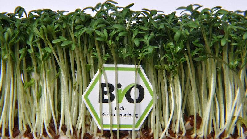 Online-Shops für Bio-Lebensmittel im Vergleich