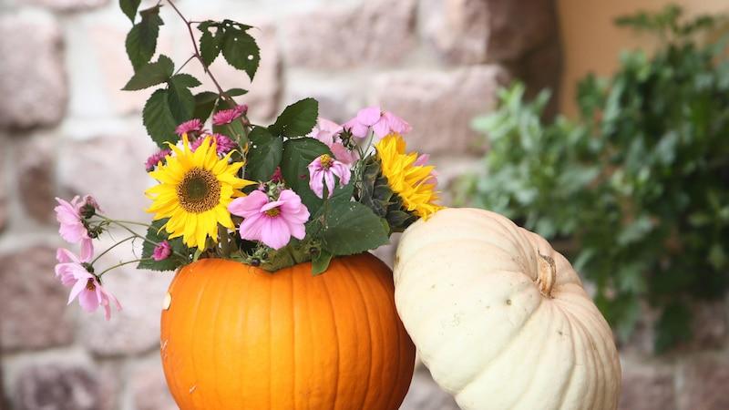 Kürbis: So gesund ist das leckere Herbst-Gemüse