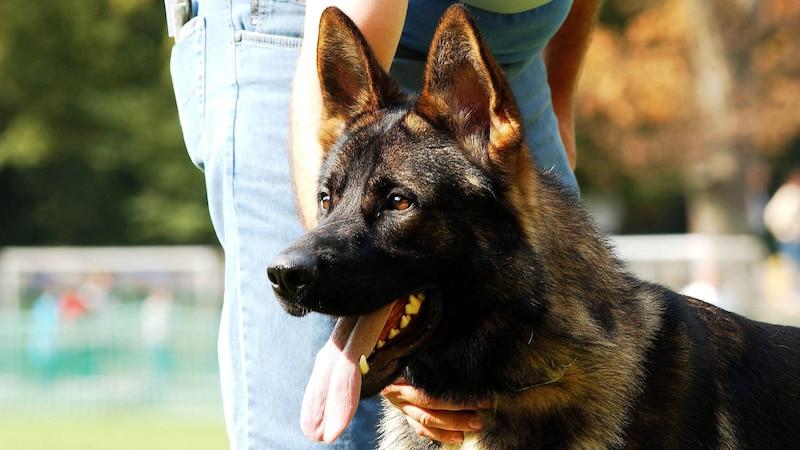 Pankreatitis beim Hund: Was Sie darüber wissen sollten