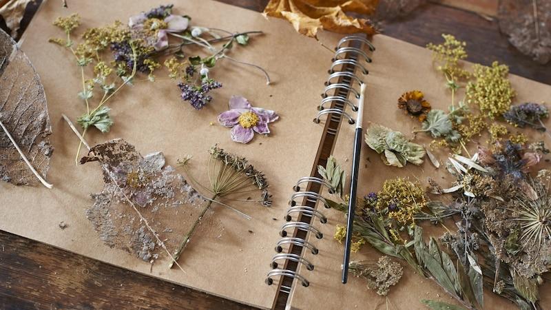 Blumen und Blüten können Sie auf verschiedene Weisen trocknen.