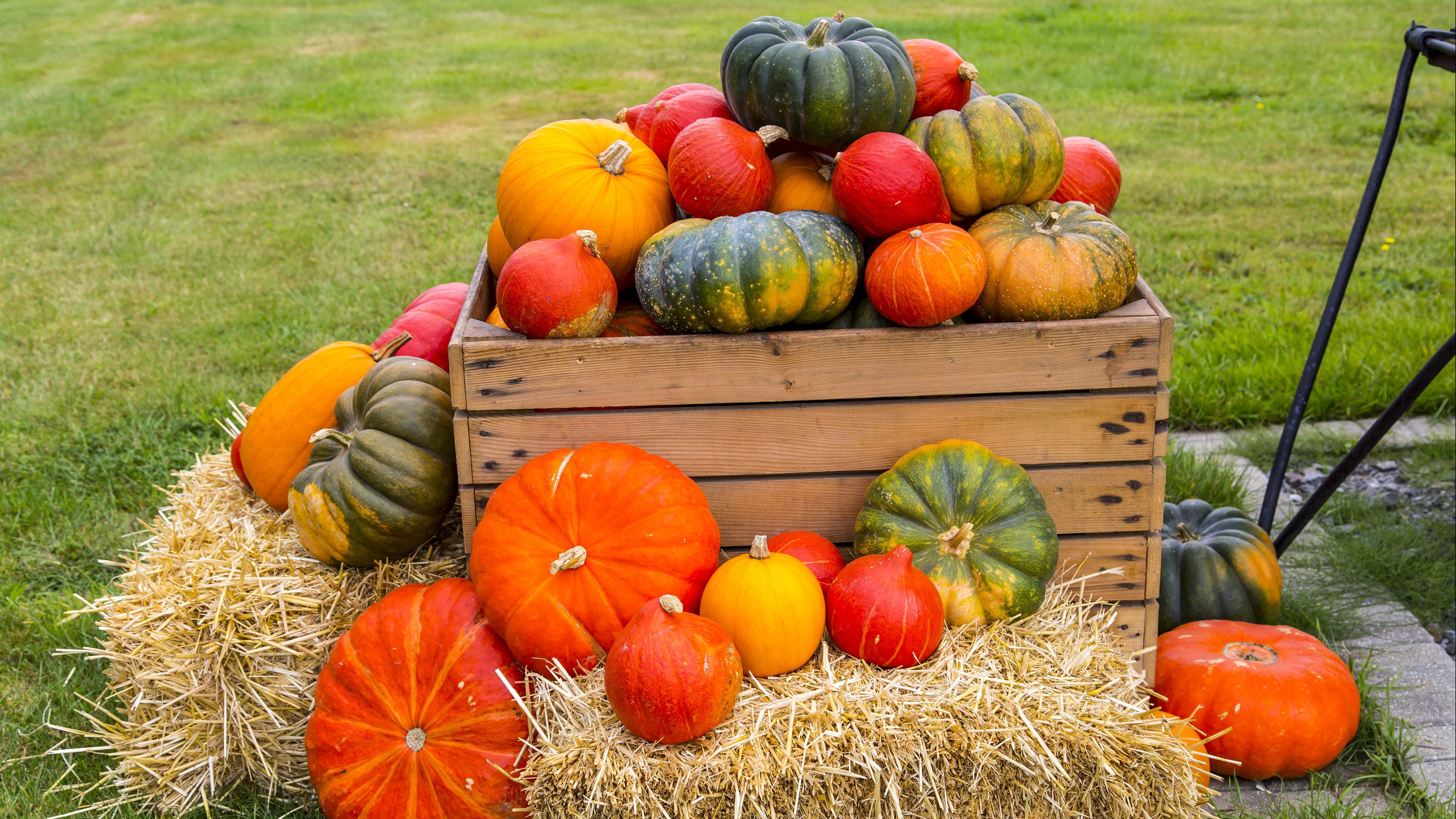 Redewendungen und Sprichwörter zum Herbst gibt es viele.
