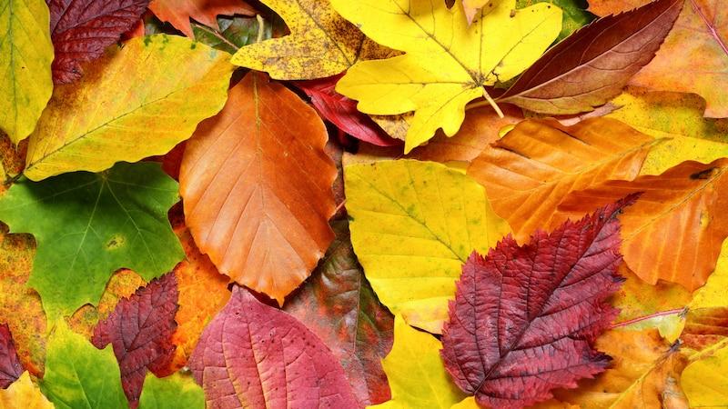 Blätter trocknen - mit diesen Tipps ganz einfach