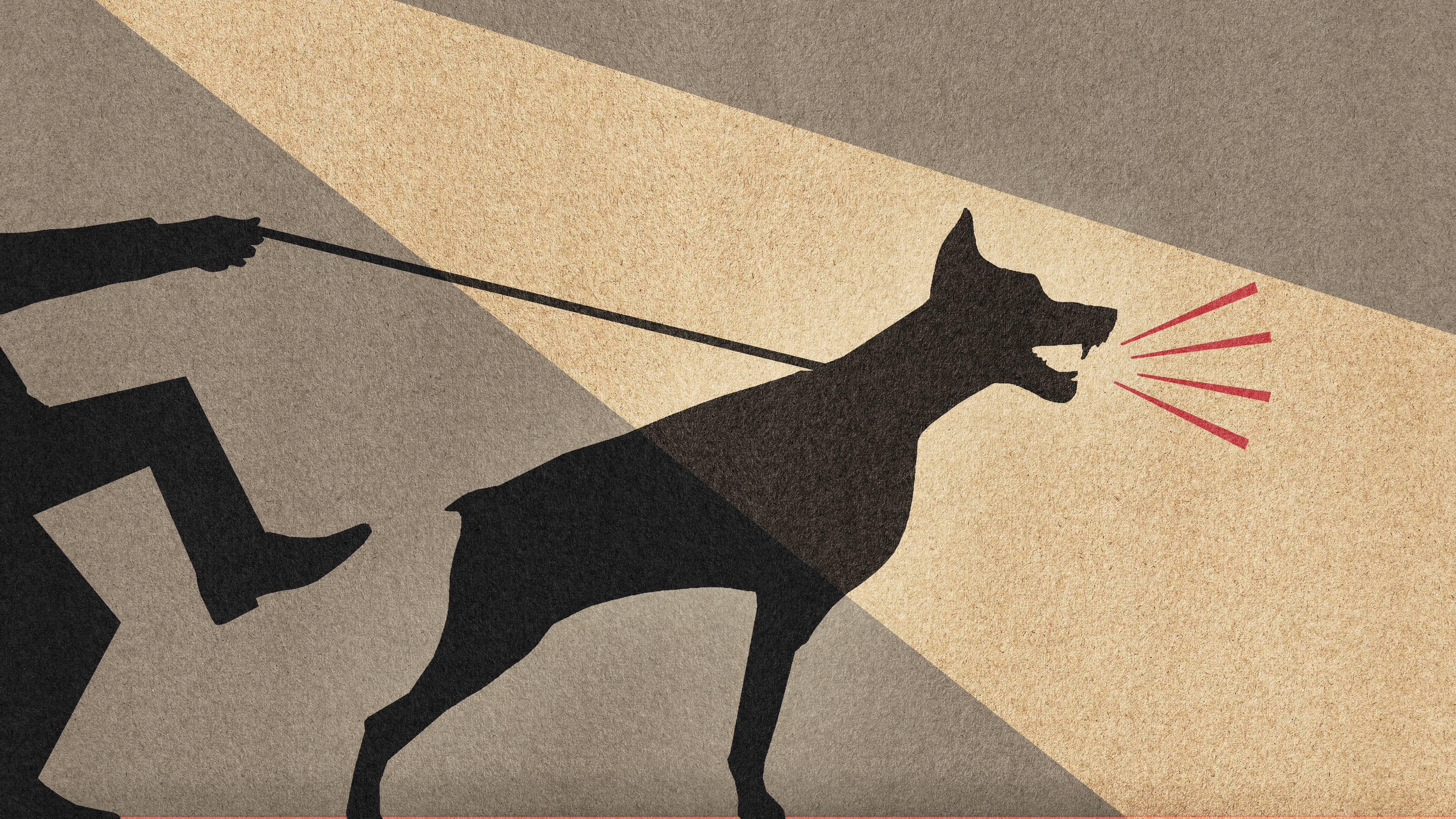 Hund bellt andere Hunde an: So können Sie es ihm abgewöhnen