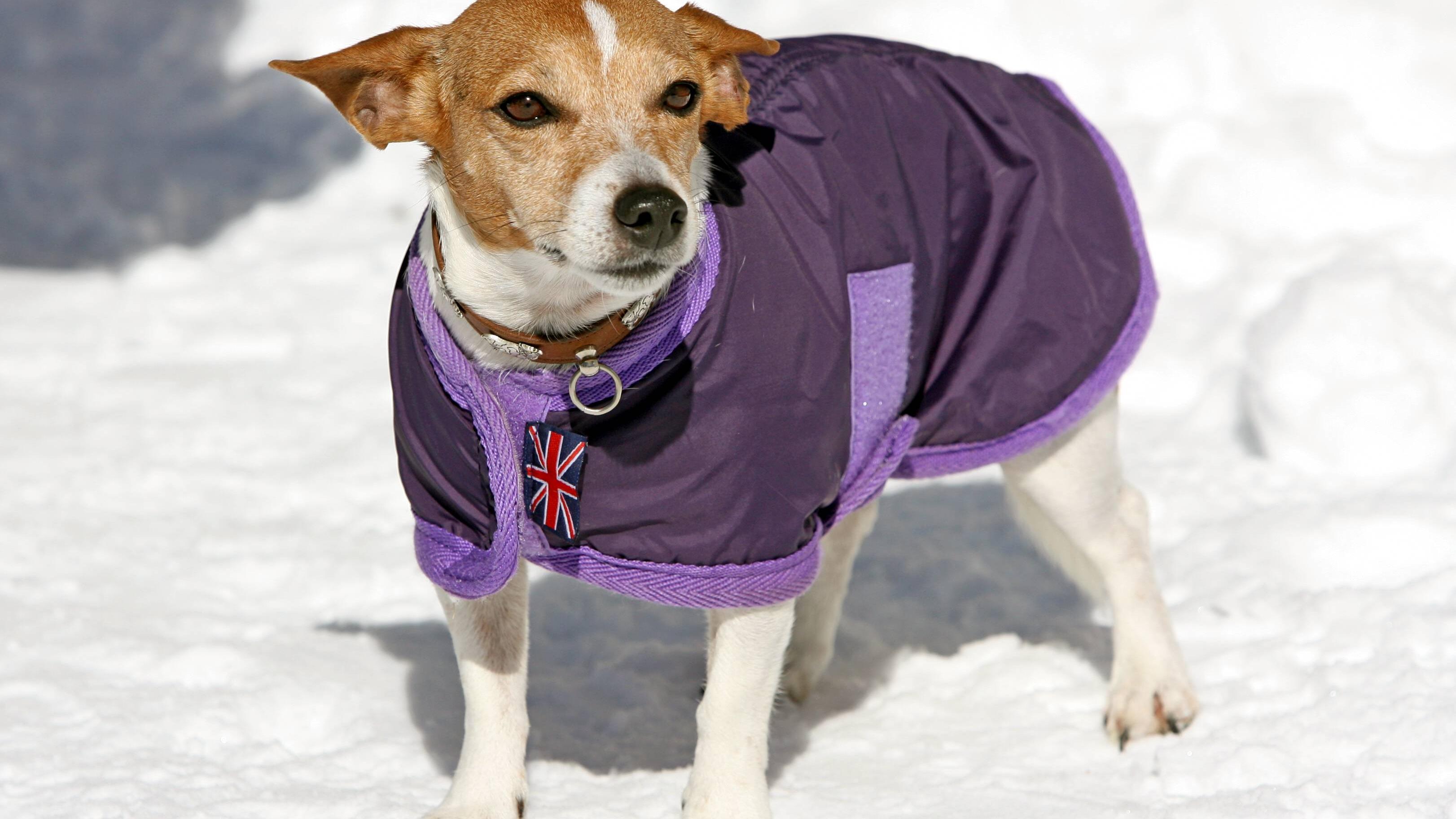 Hund friert: So schützen Sie richtig vor Kälte