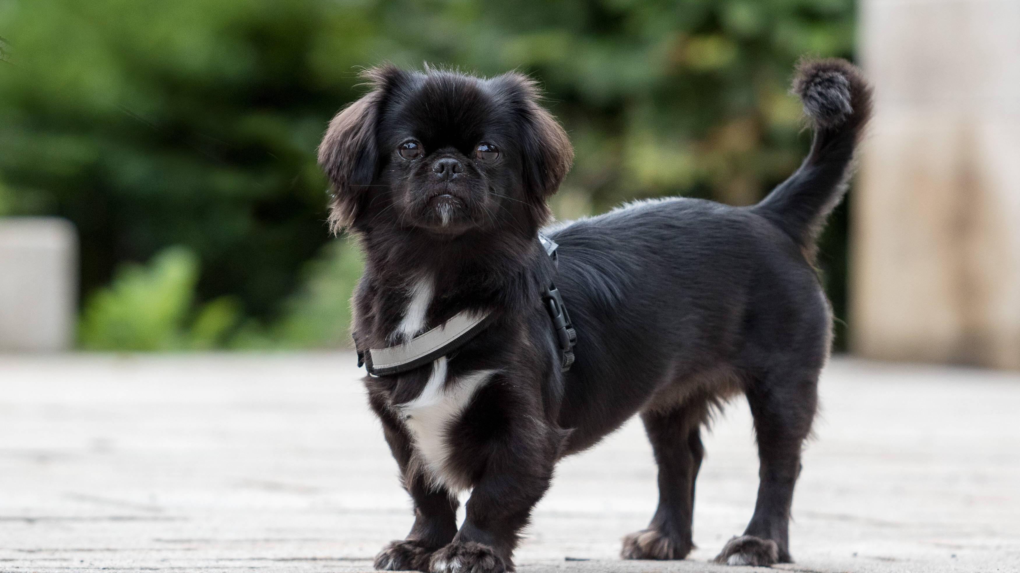 Blasensteine beim Hund: Ursachen, Symptome und was Sie tun können