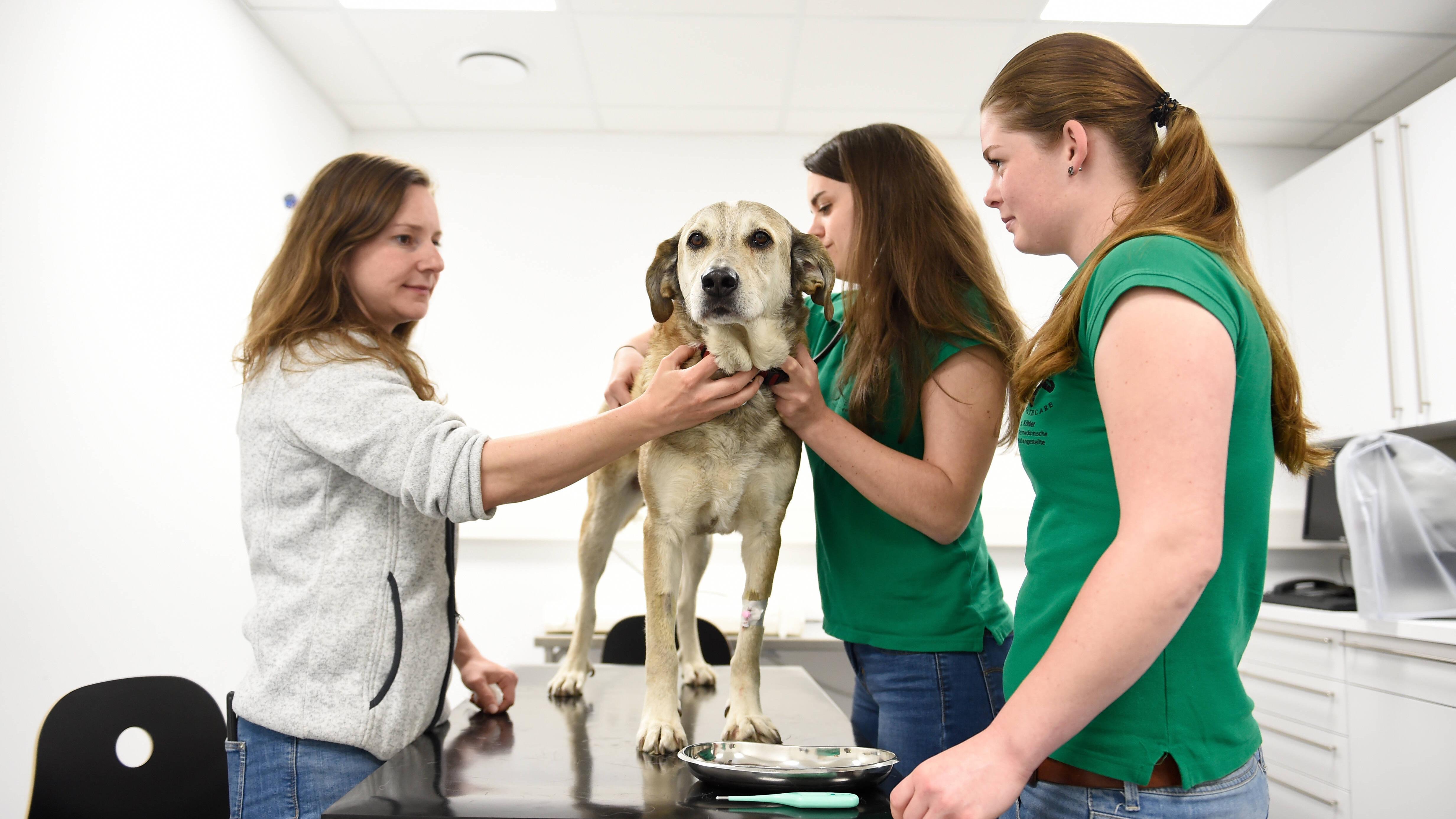 Arthrose beim Hund: Symptome erkennen und dem Tier helfen