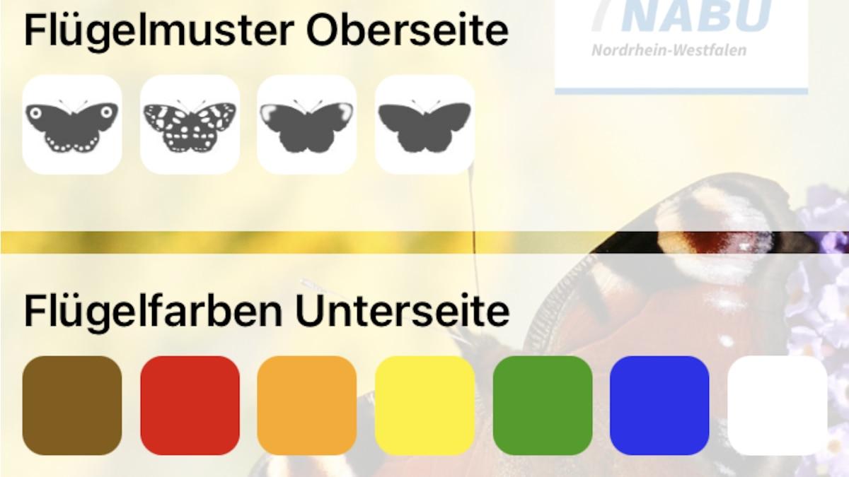 """Mit der Funktion """"Bestimmen"""" können Sie nach dem gewünschten Schmetterling suchen."""